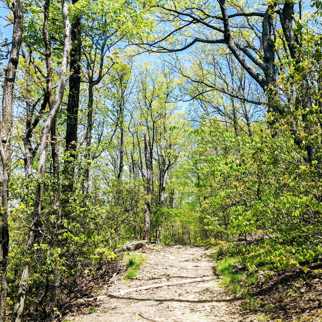 Image of a path in the woods